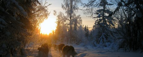 tours_dogsledding_06_big